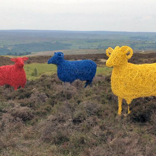 Grand Depart Sheep